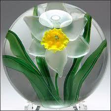 Lundberg Daffodil