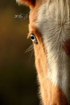 Blue eyed palomino baby. . Please also visit www.JustForYouPropheticArt.com for colorful, inspirational art and stories. Thank you so much