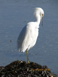 pictures of birds of north america   The Little Bird Watcher