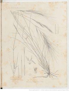 Exploration scientifique de la Tunisie..., par Ed. Bonnet et G. Barratte. Planches VI-XX dessinées d'après nature par Mme B. Heinrincq et M. Ch. Cuisin | 1895