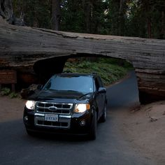 Drive Through the Tunnel Log (15 Amazing Things to Do in Sequoia National Park).