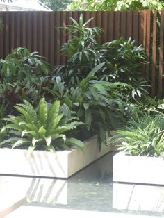 Tropical plants in low set garden beds surrounded by water. A modern yet tropical garden with relatively low maintenance.