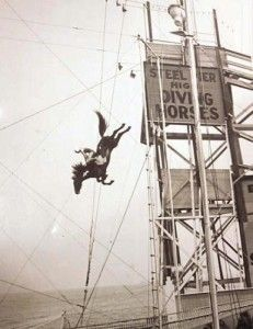 Legend of the Diving Horse at the Steel Pier in Atlantic City | Atlantic City Boardwalk Blogger use to go see the show in the early 60's