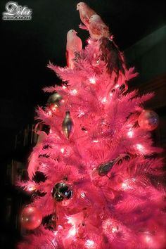Dita s pink christmas tree!!! Bebe !!! Now this is an f72ffda52
