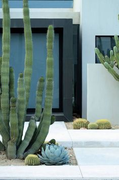 Easy Desert Landscaping Tips That Will Help You Design A Beautiful Yard Succulent Landscaping, Landscaping With Rocks, Modern Landscaping, Front Yard Landscaping, Succulents Garden, Backyard Landscaping, Landscaping Ideas, Landscaping Software, Landscaping Contractors