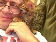 Cute Kitten Wants Owner's Glasses | Watch the video - Yahoo! Screen