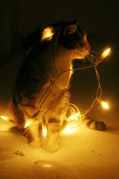 Christmas Kitty in Lights