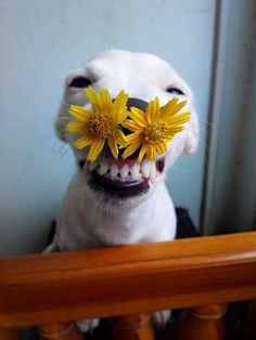 #dog #laughing #flowers