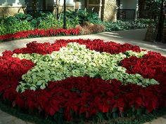 93 Best Gaylord Texan Resort Images Lone Star State Texans Grape