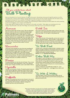 guide to spring bulb planting Spring Flowering Bulbs, Spring Bulbs, Garden Bulbs, Planting Bulbs, Garden Pots, Summer Garden, Lawn And Garden, Starter Garden, Garden Guide