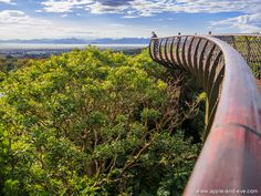 The Boomslang Walkway - Kirstenbosch Gardens in Capetown, South Africa. Would love to go!