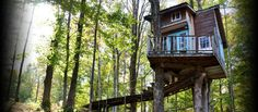 The Tiny Fern Forest Treehouse **Airbnb is a trusted community marketplace for people to list, discover, and book unique accommodations around the world**