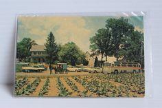 AMISH FARM and HOUSE Color Post Card, Vintage Amish Country Post Card, vintage paper ephemera, Lancaster County souvenir, Historic Souvenir