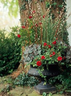 We created a planting in a 36-inch-diameter iron urn.