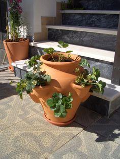 my strawberry plant