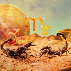 It's Scorpio Season! We'll all want to go undercover when the Sun shines on sexy Scorpio! Discover how you can embrace all the energy of this powerful transit... Sun In Scorpio, Kindergarten Anchor Charts, Scorpio Season, Beneath The Surface, Undercover, Cosmic, Tarot, Zodiac Signs, Astrology