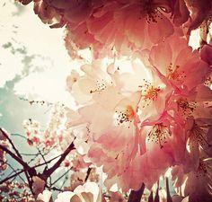 12706291119593、花、花骨朵、安之若素、Comely、意境、插图、love、暖色、花儿、淡雅、舒服、--