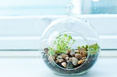 Fake a green thumb with an exotic, blooming terrarium. They're the easiest horticulture projects to make and maintain.