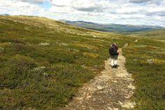 Olavsweg in Norwegen: Die besten Tipps für die Jakobsweg-Alternative - TRAVELBOOK.de