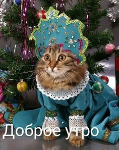 Cute Cats, Funny Cats, Animals And Pets, Cute Animals, Winter Christmas, Christmas Ornaments, Pet Costumes, Animal Photography, Kittens