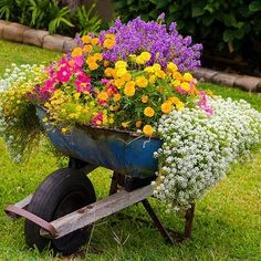 Vibrant Wheelbarrow ~ A flourish of flowering plants breathes new life into an old wheelbarrow. What a festive way to dress up a utilitarian tool!