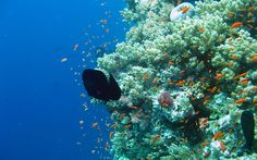 A coral reef aquarium with graphics that create the beauty of fish swimming in a 3D environment, including a reef, with clams and sea life. Description from thefemalecelebrity.com. I searched for this on bing.com/images