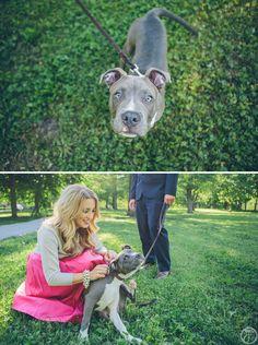 engagement session with pitbull dog // lafayette park st louis wedding photographers