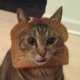 Image result for images of animals shaped like loaves