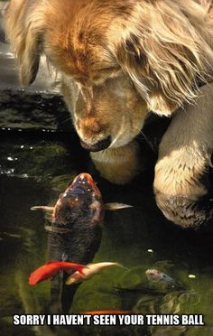 """""""Sorry, I haven't seen your ball."""" this makes me think of Buddy and his never-ending hunt for the fish lol"""