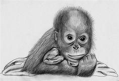 Orangutan baby sketch