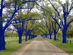 Blue trees installation art by Konstantin Dimopoulos