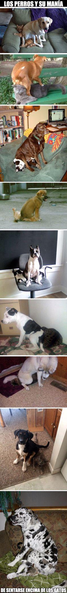 ¿Alguna vez te habías fijado en esta manía de los perros?        Gracias a http://www.cuantocabron.com/   Si quieres leer la noticia completa visita: http://www.estoy-aburrido.com/alguna-vez-te-habias-fijado-en-esta-mania-de-los-perros/