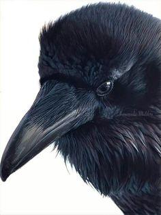 Pretty Birds, Beautiful Birds, Animals Beautiful, Animal Sketches, Animal Drawings, Crows Drawing, Rabe Tattoo, Crow Painting, Raven Bird