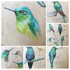 Bird Drawings, Animal Drawings, Bird Sketch, Ledoux, Nature Drawing, Nature Illustration, Sketch Painting, Animal Sketches, Sketchbook Inspiration