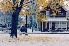 park in the snow Fall Trees, New Homes, Snow, Park, Plants, Autumn Trees, Parks, Plant, Eyes