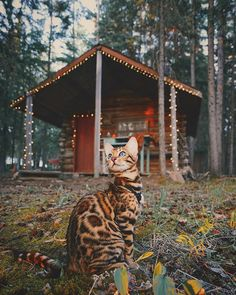 猫のスキはカナダ在住のベンガル猫で、飼い主とともに旅行を楽しむ。スキのInstagramでは素晴らしい写真の数…