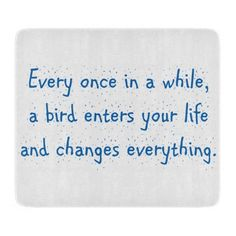 Every Once In A While, A Bird Enters Your Life …