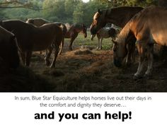 This is very cool. They help homeless horses and they're located in Western MA. I'm going to make a donation for a birthday gift of someone I know who LOVES horses!
