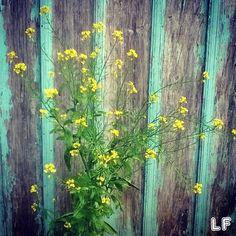 Flores na Chácara