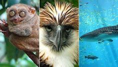 Wildlife at Risk: 20 Endangered Species Found in the Philippines
