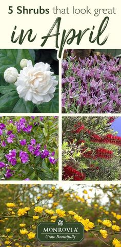 These five shrubs fr