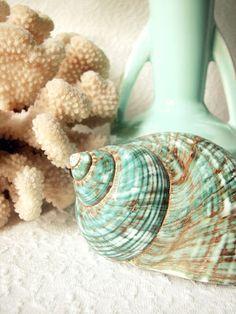 """True Blue Sea"" (Turbo Shell) by Trisha Brink"
