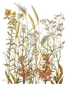 Дорогие мои сеньорины и сеньоры! Я решила выселить цветочки на выселки в отдельное сообщество art_gerbary, надеюсь что найдутся и кроме меня любители, которым это будет интересно. Присоединяйтесь! Несколько сканов из книжки Herbier de France. Акварели Michele Delsaute Книга большая и толстая, как…