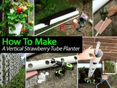Strawberry Tube Planter - they are taking over my garden, maybe I should make these instead and replant.