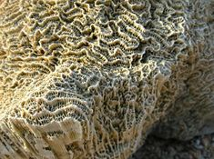 Scientists are mimicking how coral makes it skeleton and are using that information to make a cement replacement that actually sequesters carbon rather than emitting it.