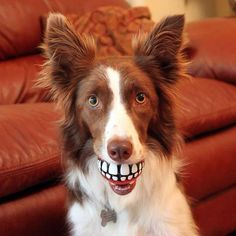 LIKE if you agree these dogs are having a ball showing off their pearly whites (and you're enjoying it just as much!)