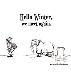 It's officially here; I've had to break ice off the water troughs in the mornings and the other day I wrote my name in the frost/snow with Stormy's hoof prints during our warmup. While the latter was fun, I'm already ready for summer to come back. Funny Horse Memes, Funny Horses, Cute Horses, Funny Quotes, Horse Humor, Equestrian Memes, Equestrian Problems, Equine Quotes, Inspirational Horse Quotes