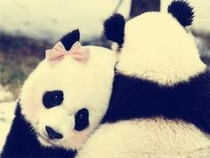 If I was a panda, I would totally be one with a bow:)