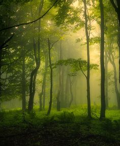 #South #Moravia #forest