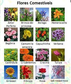 Flores Comestiveis Flores Não Comestiveis ...